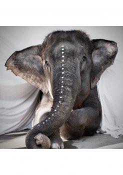Phot of our friend elephant Adele