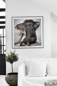 elephantadele-onwall-tyvek_ellos