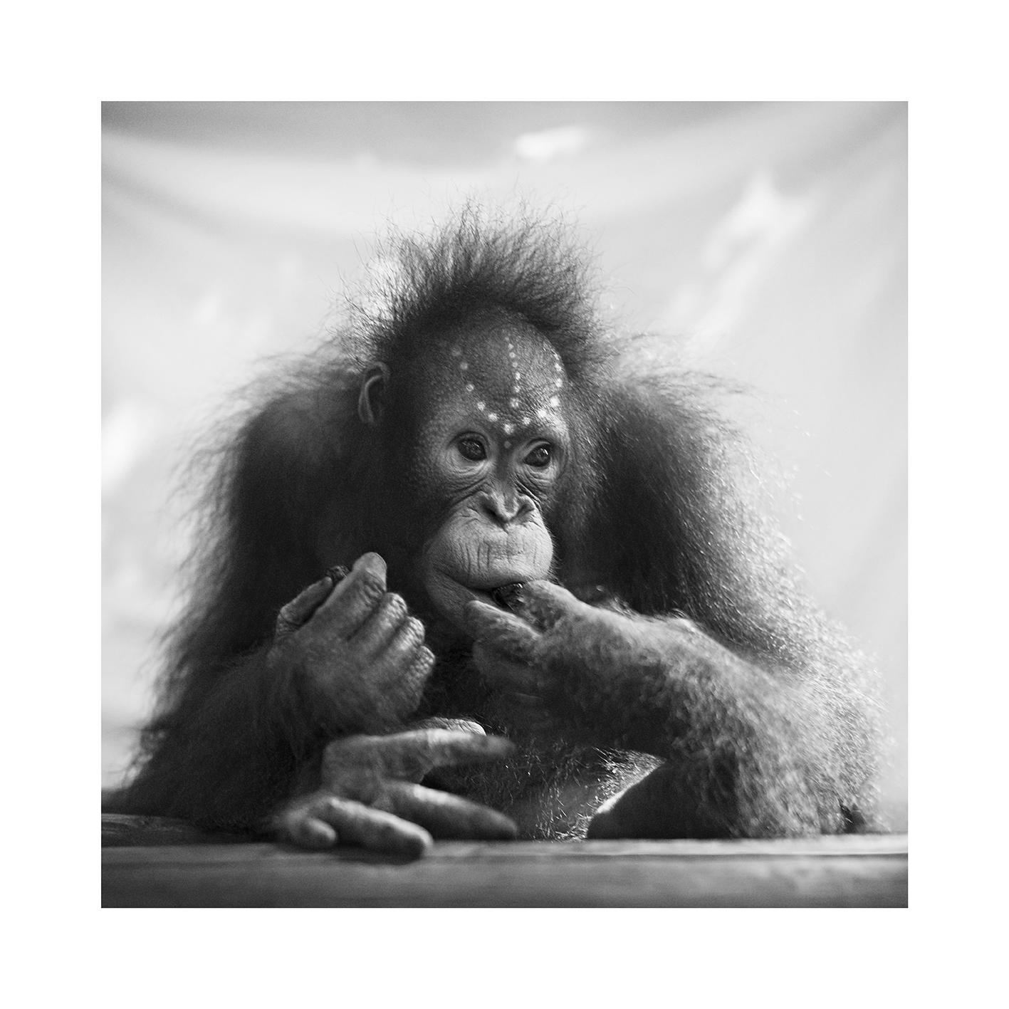 Lovely phot of orangutan baby Fajar