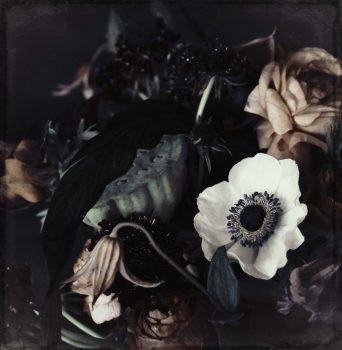 flower print ranunculus