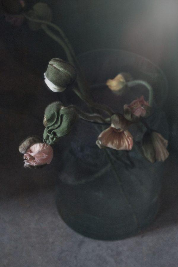 Petroleum poppy flower in a vase