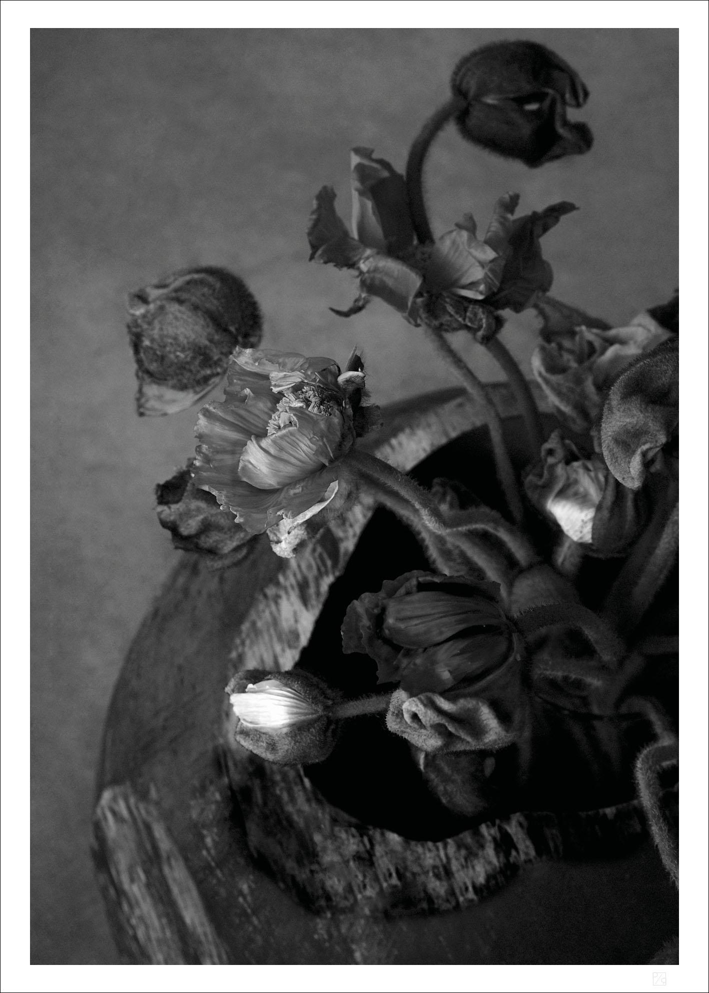 Poppy poster Black and White