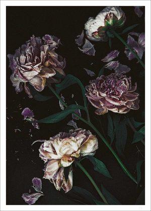 Fallen peonies poster