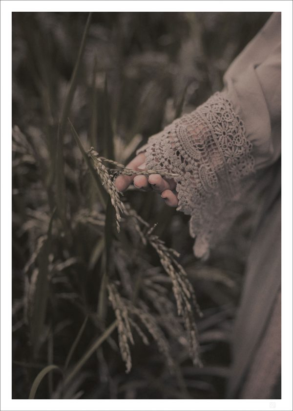 A hand and a rice field makes our poster Hand and rice field poster