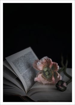 Pink poppy in a book poster