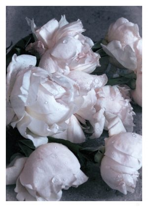 crispy roses poster