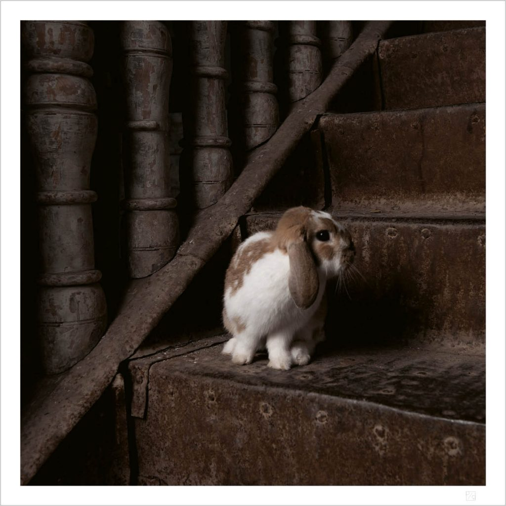 Bunny on stairs poster
