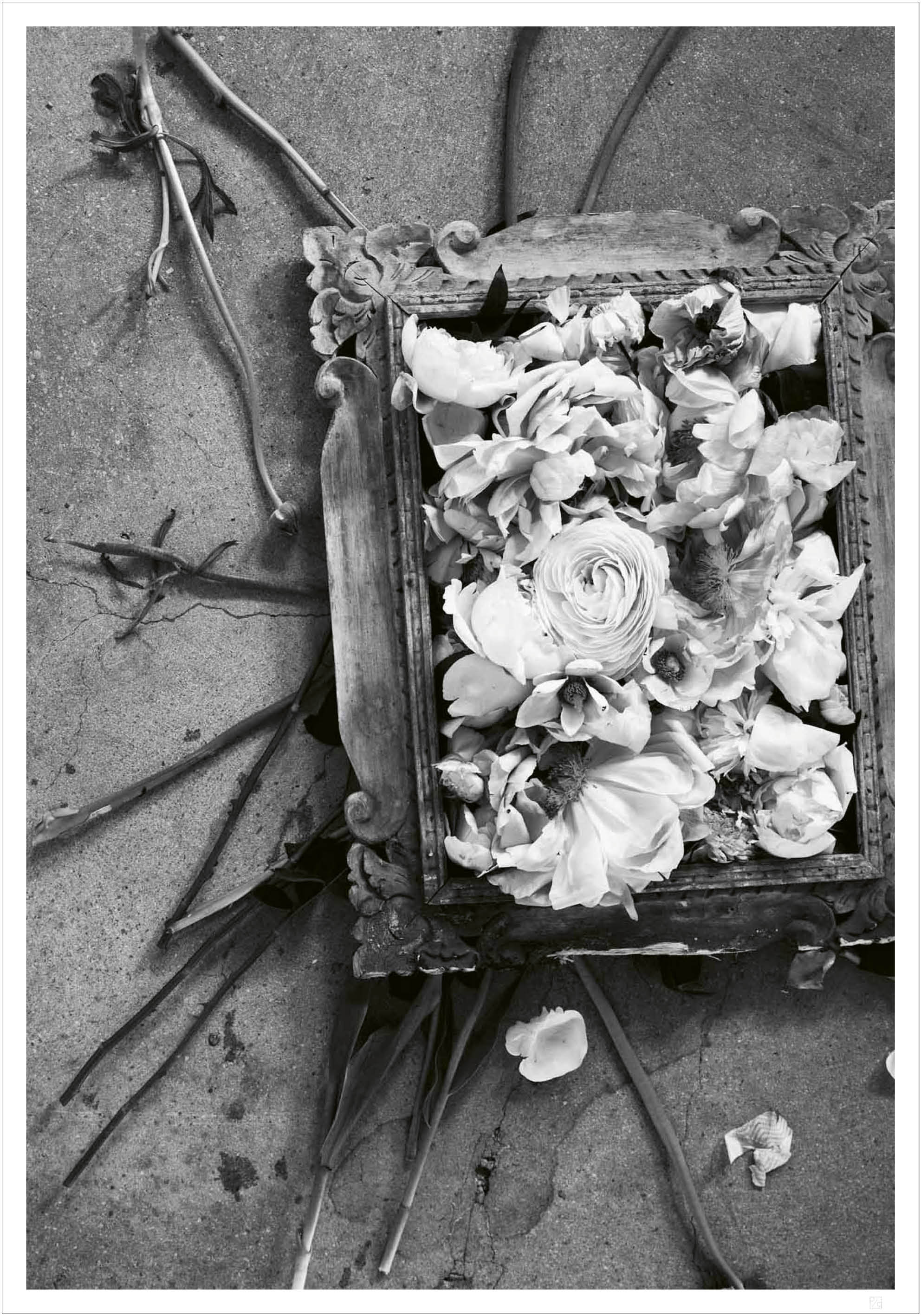 Flowers in frame poster