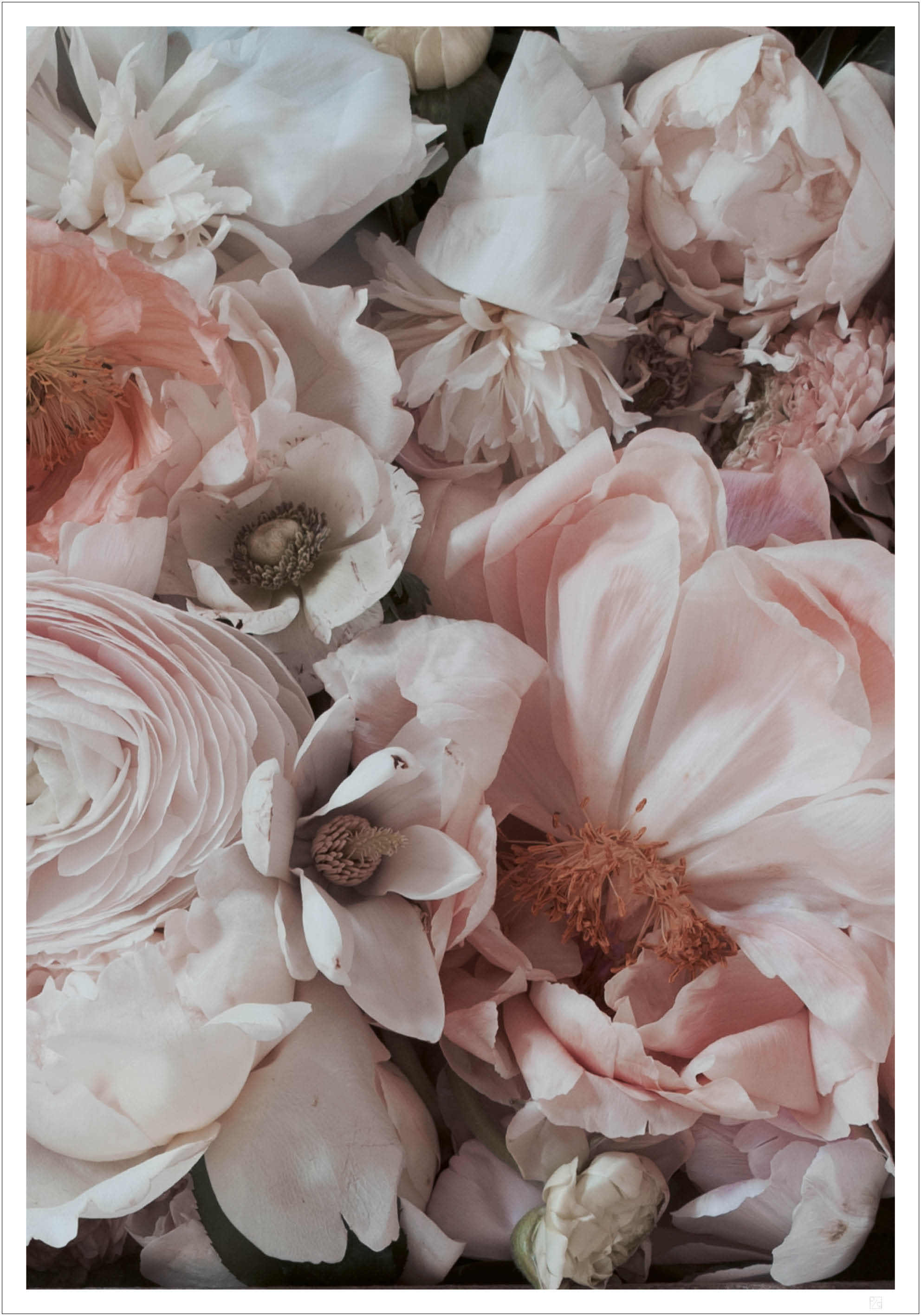 Pink blossom poster
