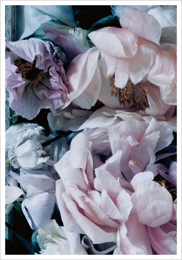 purple blossom poster