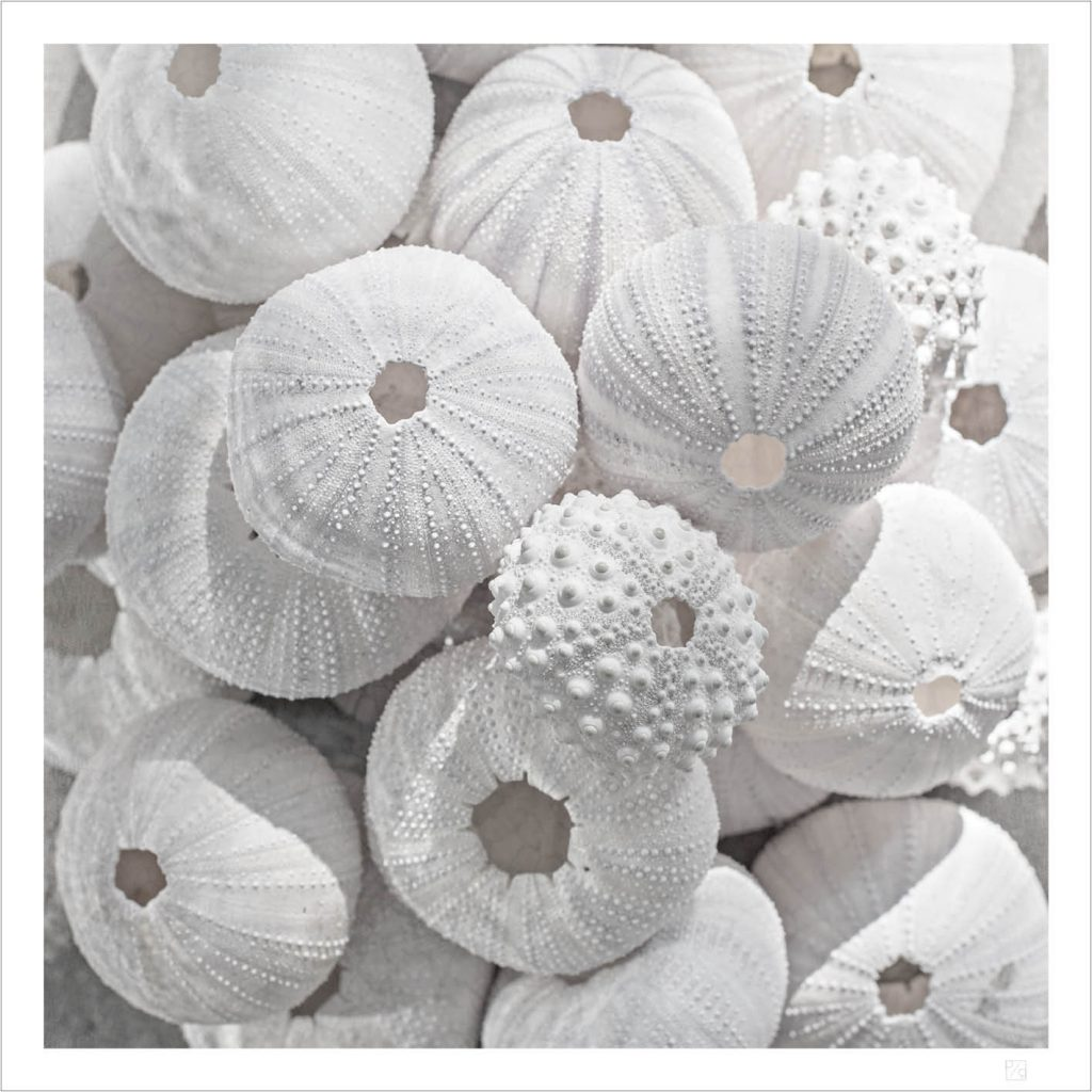 From the sea of Bali we made this Sea urchin and shell poster