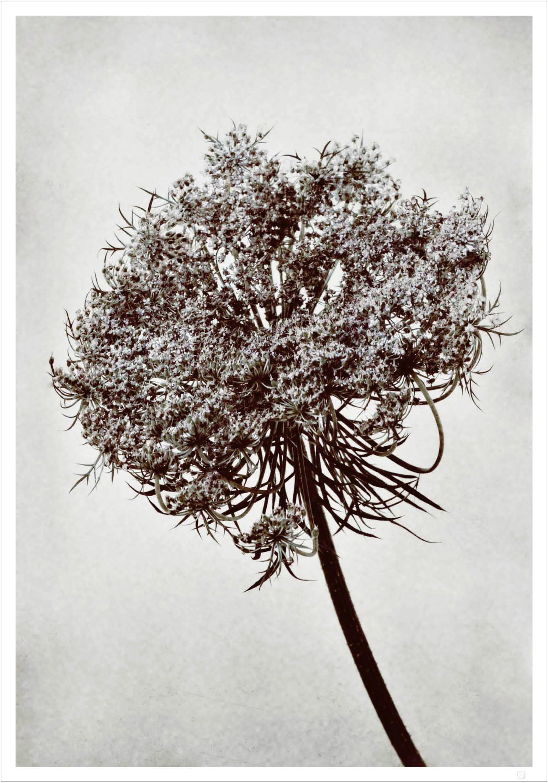 Flower tree poster
