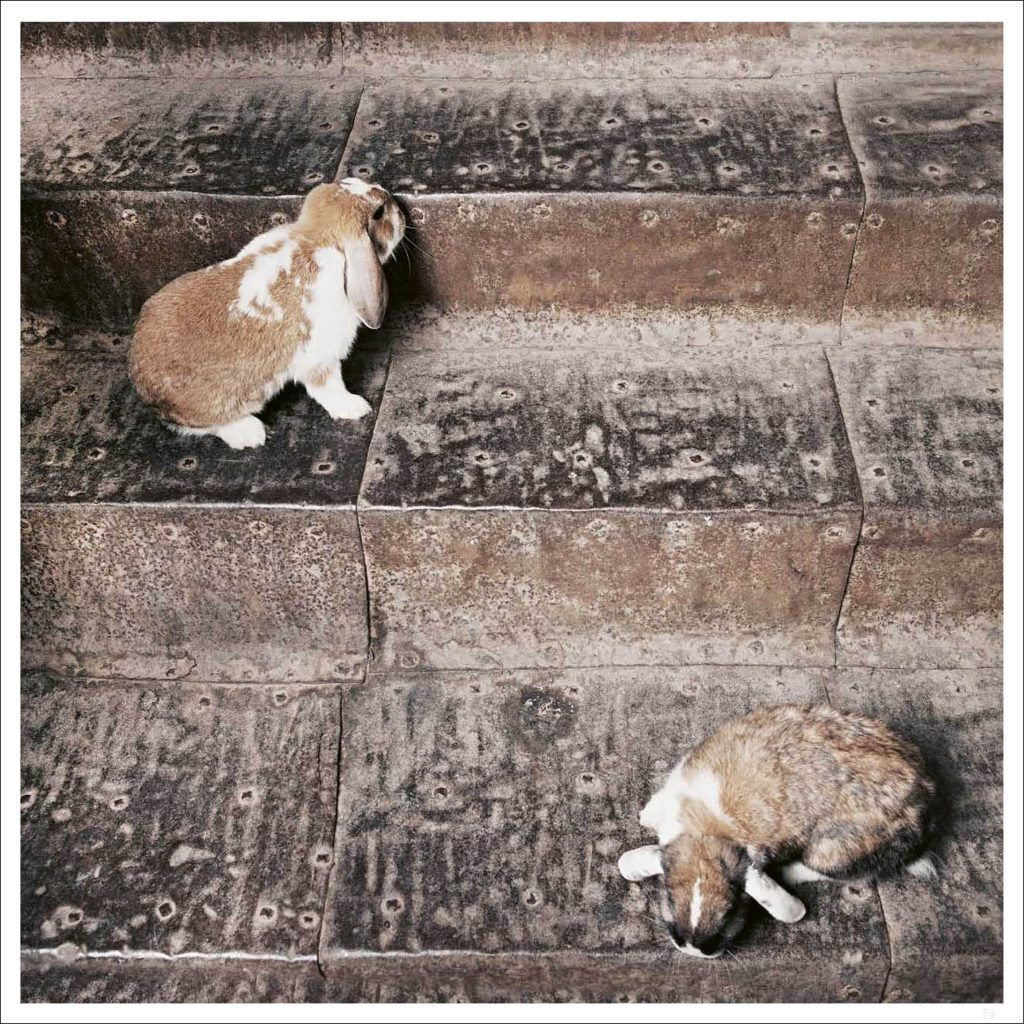 Bunnies on stair poster