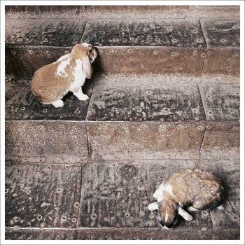 Bunnies on stair