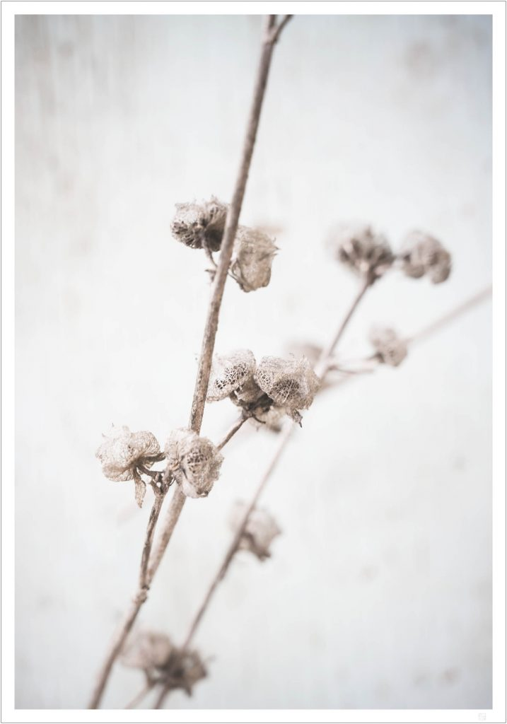 dried autumn flowers poster