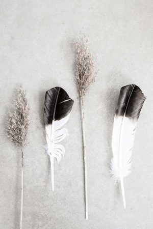 some dried reeds and feathers makes a dried reeds and feather poster