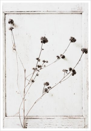 A photo of a monochrome flower