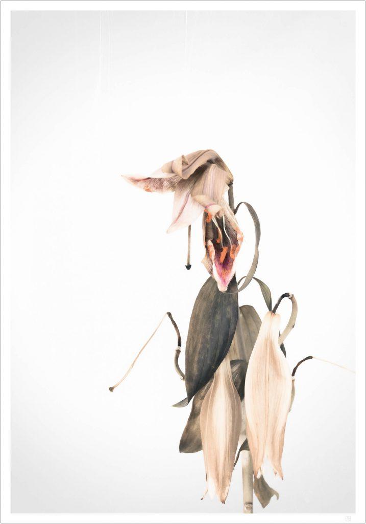 nude lilies