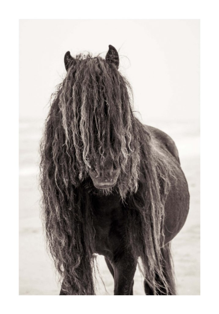 black wild horse on the beach