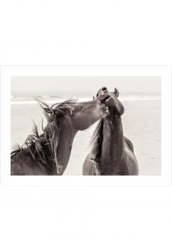 Nice phot of true horse love at the beach