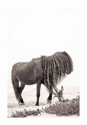 horse with long mane poking on wood