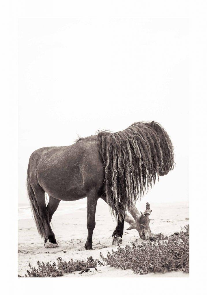 horse with long mane poking on wood