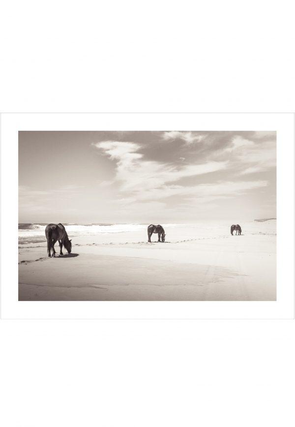 Three beautiful horses on the beach