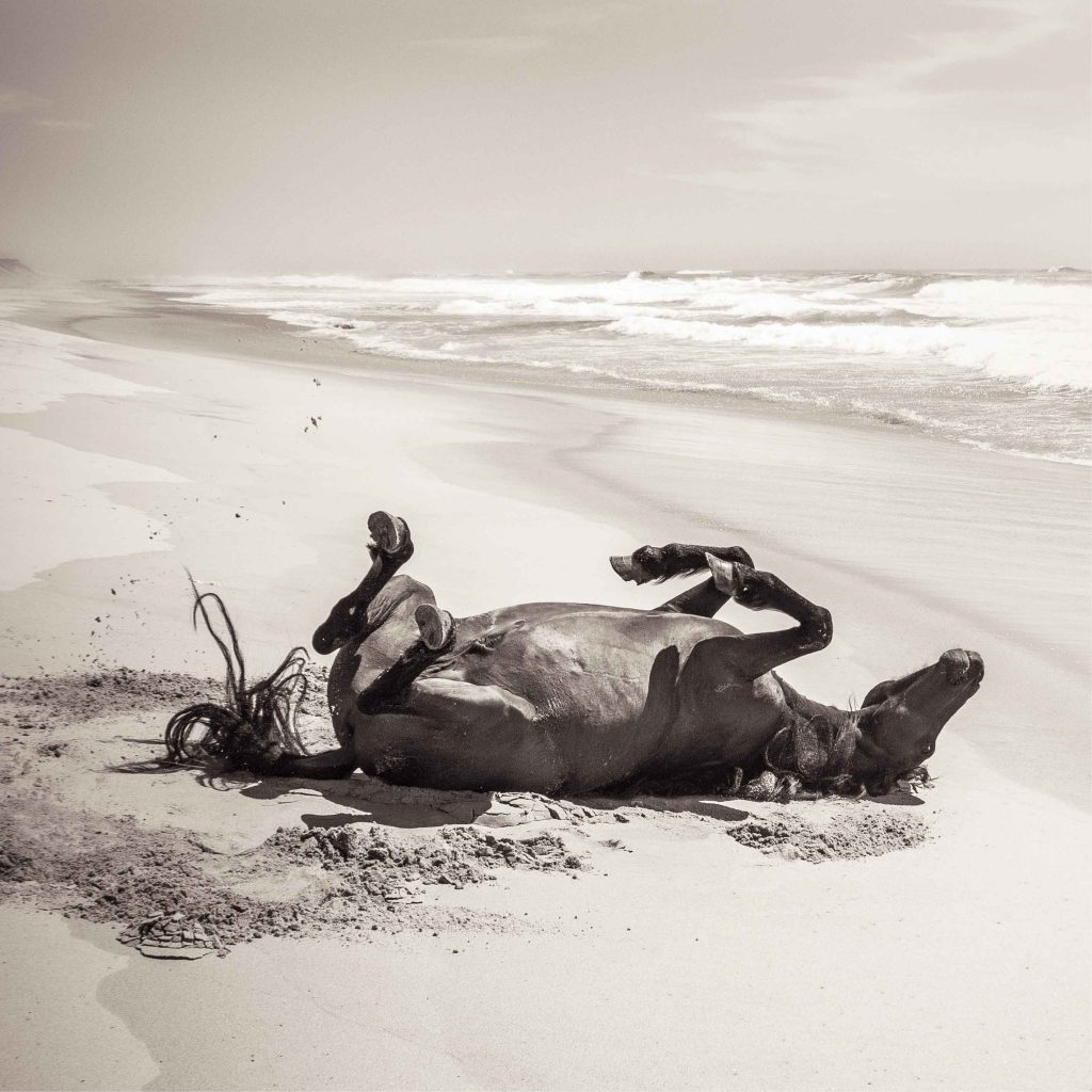 Wild Horse On The Beach Love Warriors Photo Art Print And Posters