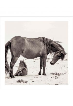 wild horse with foal on a beach